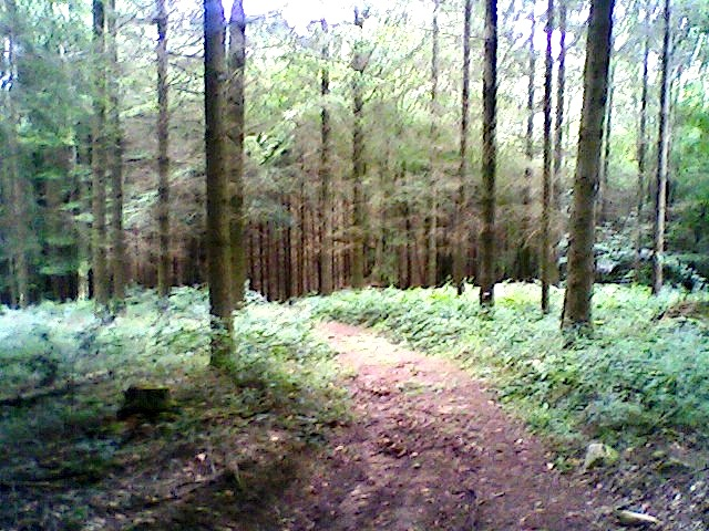 """The Hermannshoehen Forest trail in Germany"""
