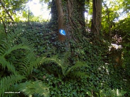 """""""Blue trail markings when hiking the Siebengebirge trail in Germany"""""""