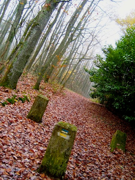 """Yellow trail markings in our Beaujolais Nouveau hike in St Remy les Chevreuse"""