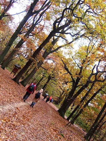 """Go hiking in Paris in the Verriere Forest"""