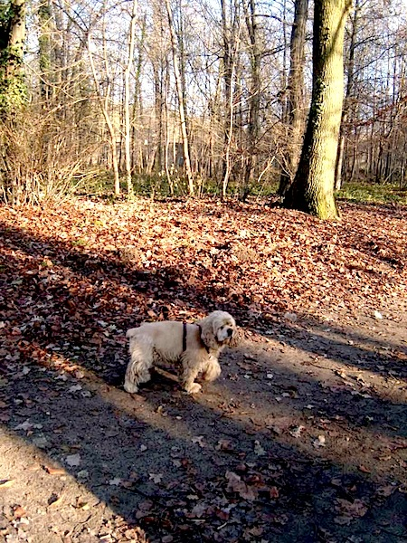 """Blondy, Easy Hikers' pet dog, on a country walk in Chantilly near Paris"""