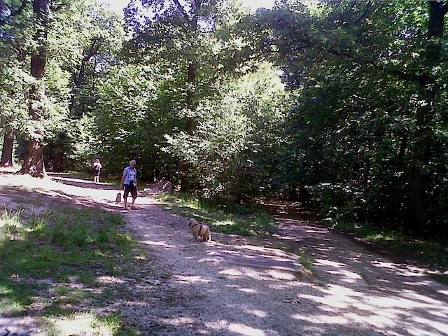 """Forked trail in Etang near Paris"""