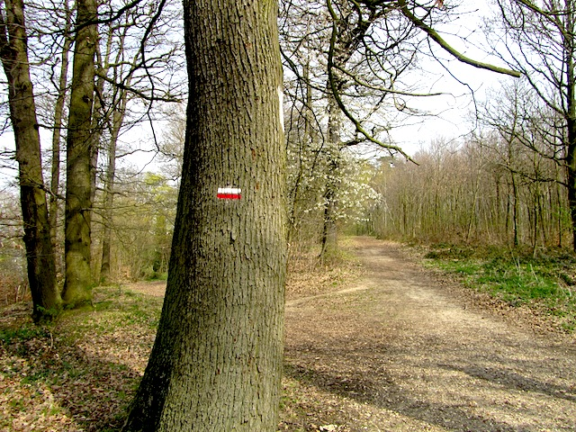 """Red balisage hiking marking on a tree in the Forest of Versailles"""