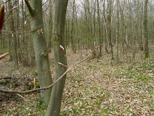 """Red and white balisage crossed in hiking trail in Forest of Versailles"""