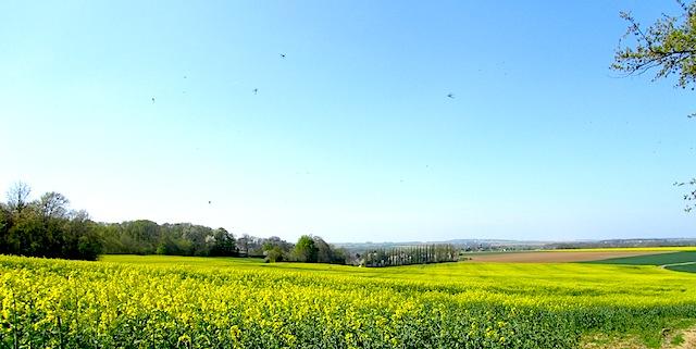 """Rapeseed fields along Santeuil hiking trail near Paris"""