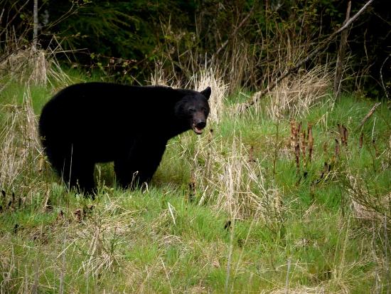 """Be bear aware when hiking to the Cheakamus Lake"""
