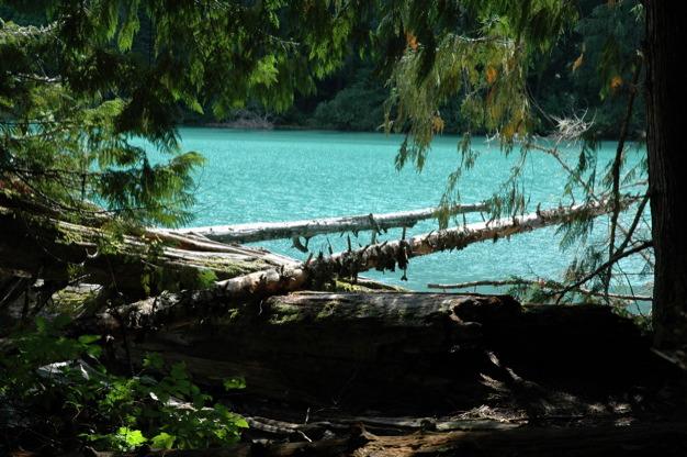 """Easy hiking trail in Cheakamus Lake Vancouver"""