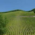 """Another vineyard seen from train on way to hiking and holidays in the Saarland Germany"""