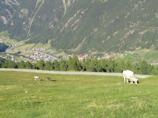 """An Alpine scene complete wth a cow in Tyrol"""