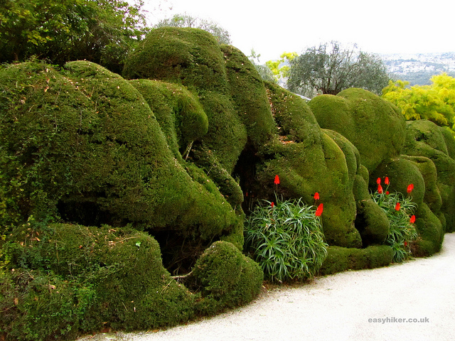 """A quirkily cut hedge in the Exotic Botanical Garden in Menton"""