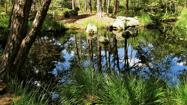 """A mountain lake along the hiking trail in Fontainebleau near Paris"""