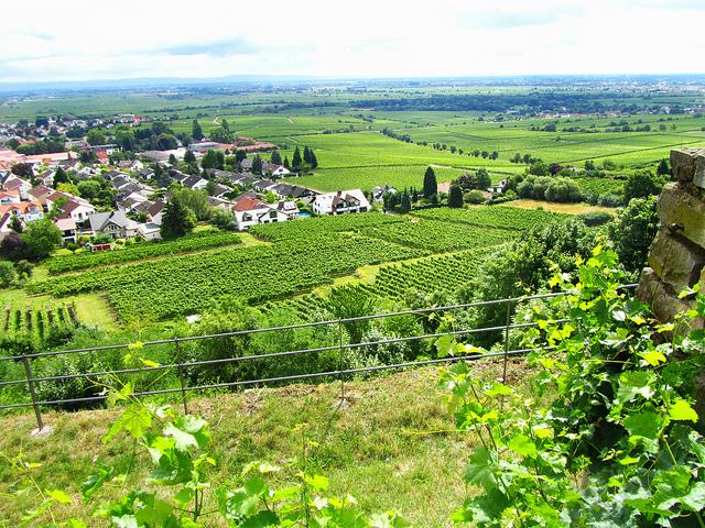 """""""Wacheneim hiking trail in the Palatinate"""""""