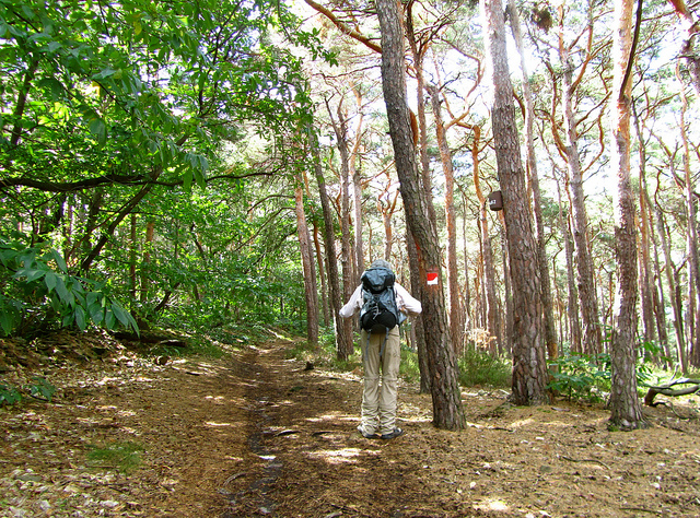 """""""into the forest of Wachenheim hiking trail in the Palatinate"""""""