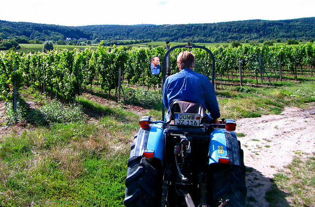 "7793695564_0cc42fa82c_z""Dirk Renzelmann on his tractor visit to his vineyard in the Palatinate"""