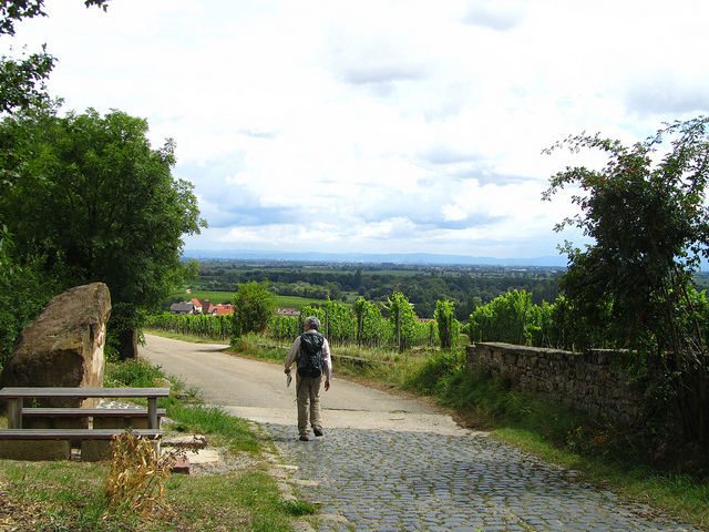 """The street leading to Forst along vineyards"""