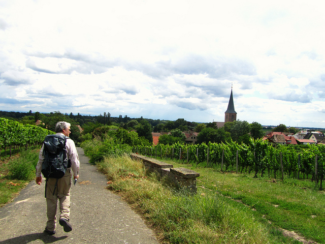 """A steeple in the town of Forst seen from across vineyards"""