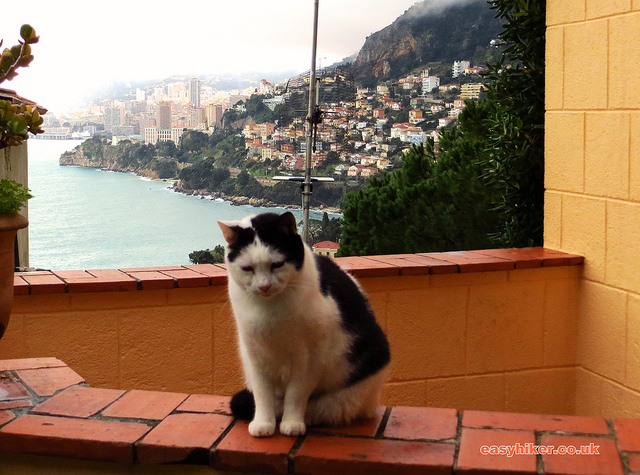 """another of the hiking kittens this one in Roquebrune French Riviera"""