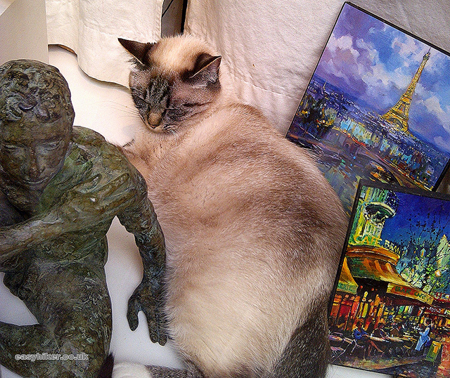 """""""a cat in a display window in Paris"""""""
