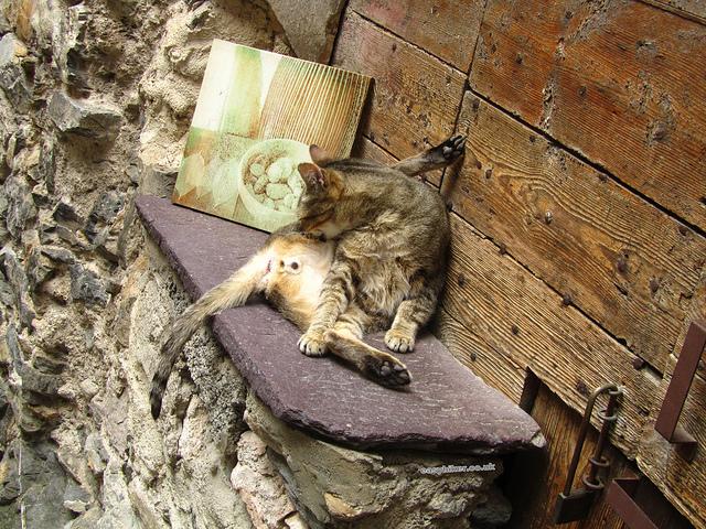"""""""relaxing hiking kitten in Tende, France"""""""