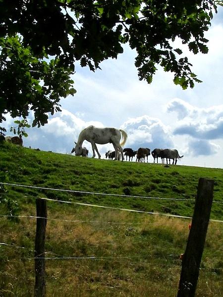 """German hiking trails - Animal farm along the Drahthandelsweg"""