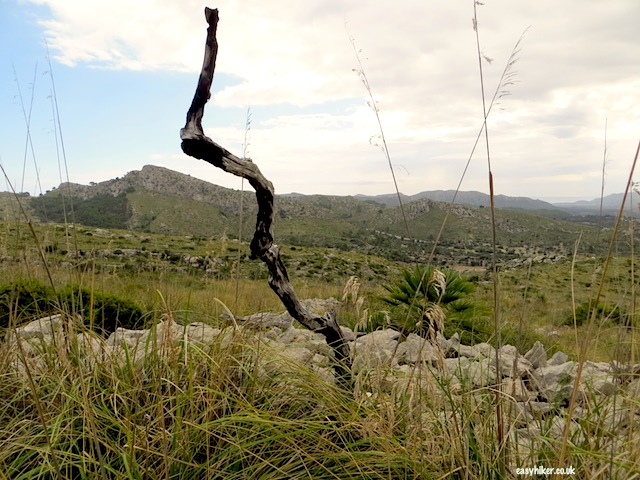 """Northeastern part of Mallorca being reclaimed by nature"""