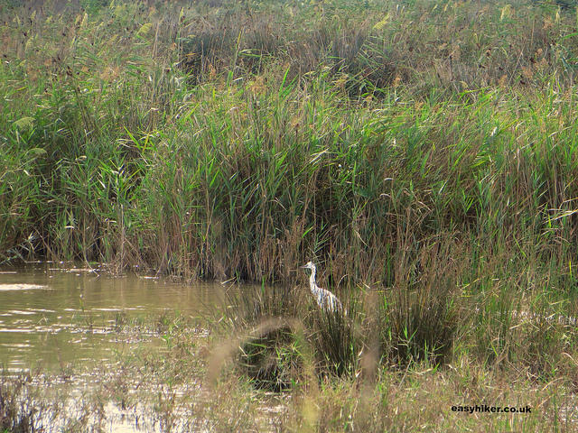 """A bird sighting in the Mallorcan marshland of S'Albufera """