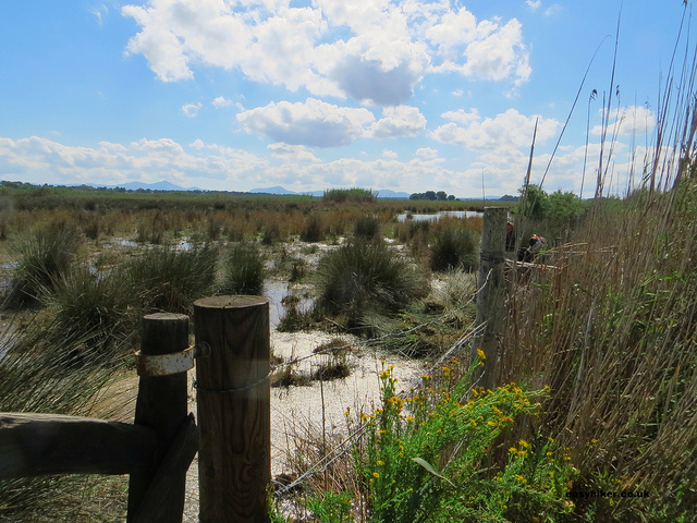 """A view of a Mallorcan Marshland"""