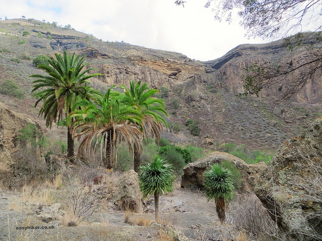"""At the bottom of the crater on the Caldera de Bandama hike"""