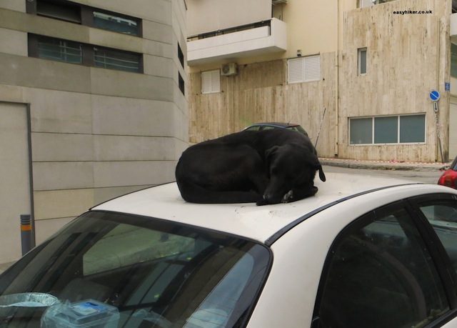 """Three Easy Pieces for Hikers on Paros so you won't be like this dog on car roof top"""