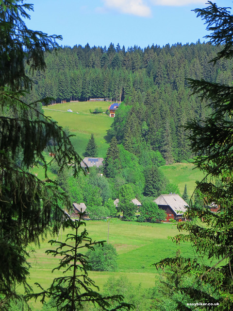 """The hike along Lake Titi is Black Forest for Beginners"""
