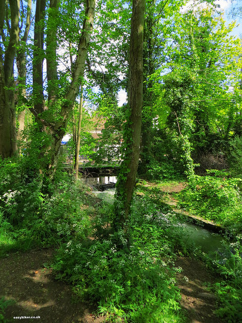 """The river Ver in St Albans near London"""