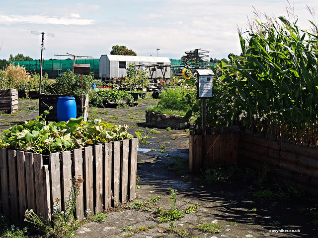 """A small organic garden in the Tempelhof airport in Berlin"""