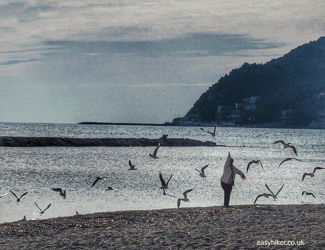 """feeding seagulls on the beach of San Bartolomeo on the Italian Riviera"""