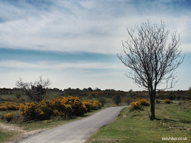 """""""Yelverton - Smiling Face of the Moors"""""""