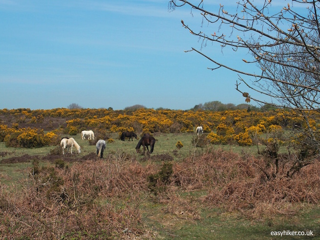 """""""Dartmoor - Smiling Face of the Moors"""""""