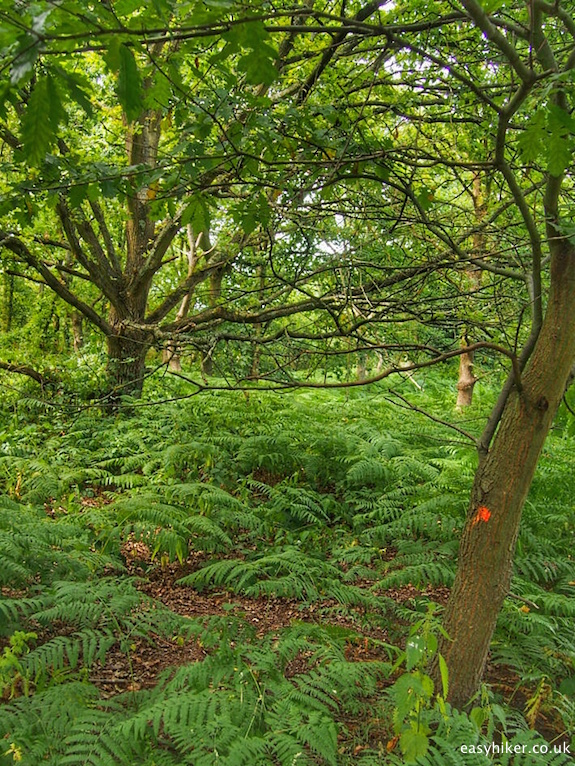 """Forest in Wimbledon Common"""