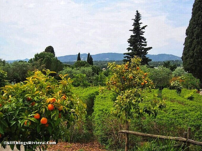 """orange trees in the garden of scents in Mouans Sartoux"""