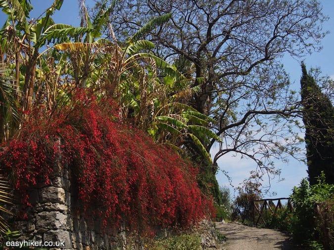 """lush vegetation in the greatest of all Riviera gardens - Hanbury"""