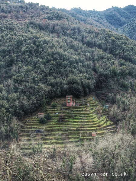 """""""old neglected farm terraces in Ligurian Hills of Apricale"""""""